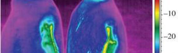 Le test d'une caméra thermographique sur un manchot